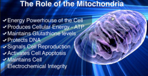 Ketogenic diet benefits - increased mitochondrial energy